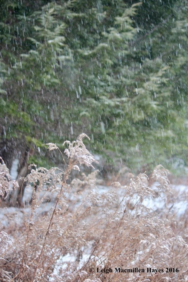h-snow