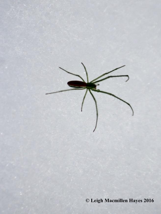 l-big-spider-2