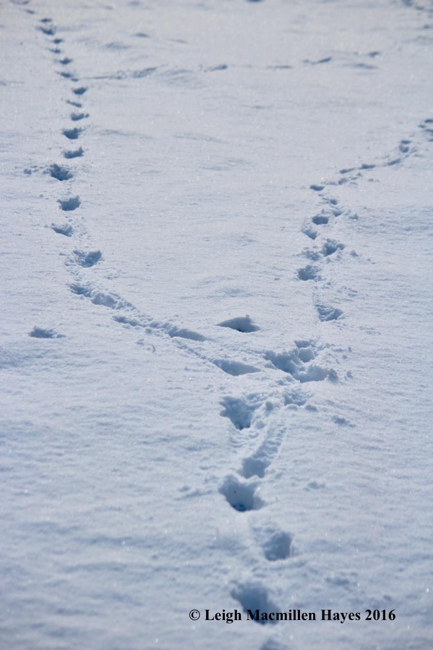 l-coyote-trails-split