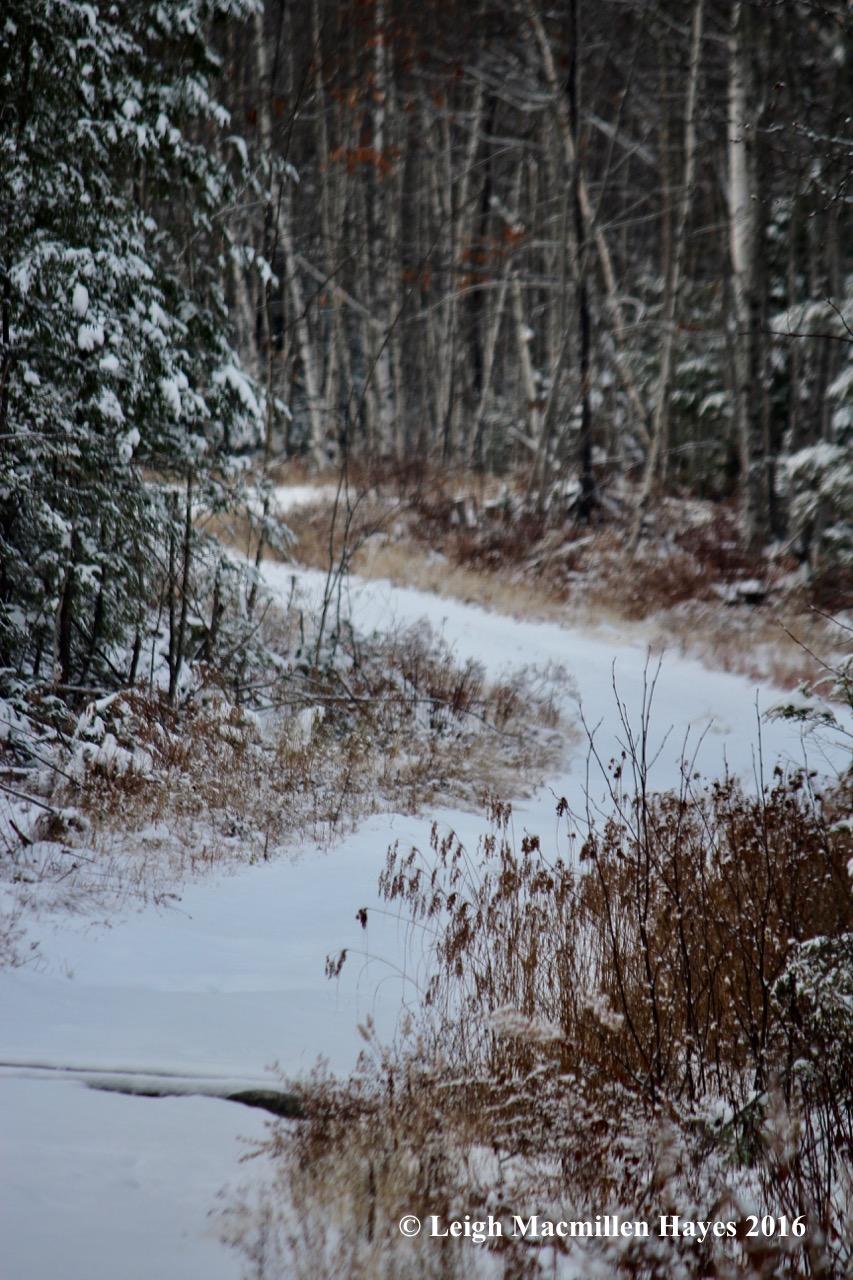 l-logging-road