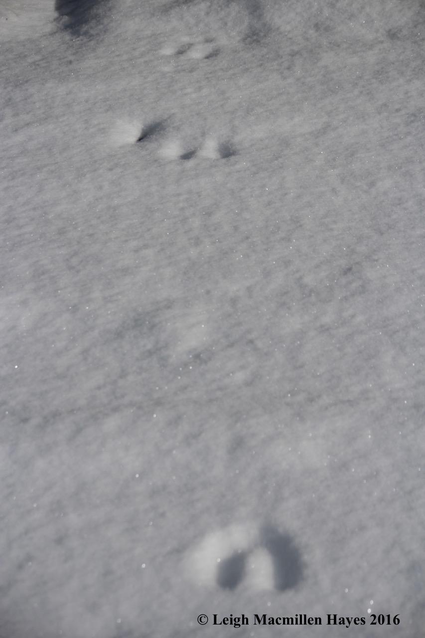 l-moose-prints