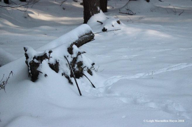 p-cowpath-checking-stump
