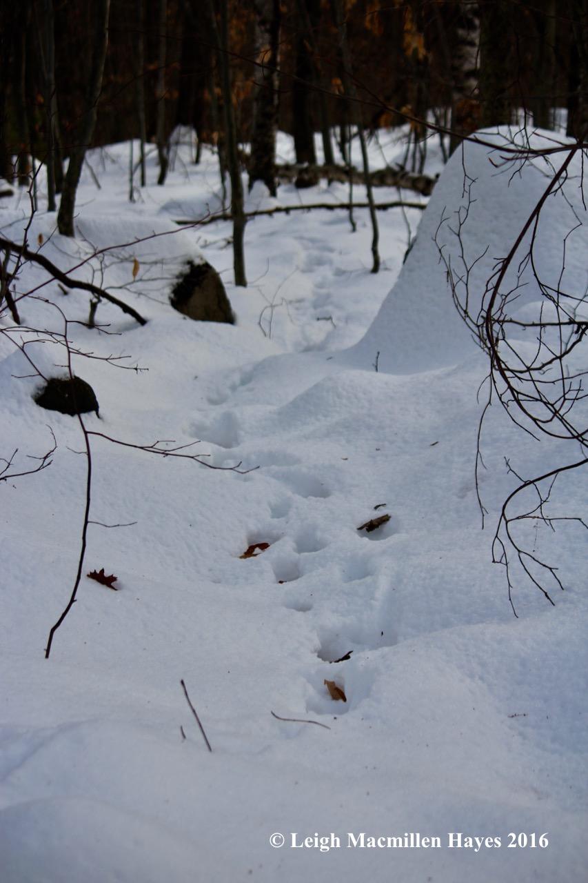 p-deer-path