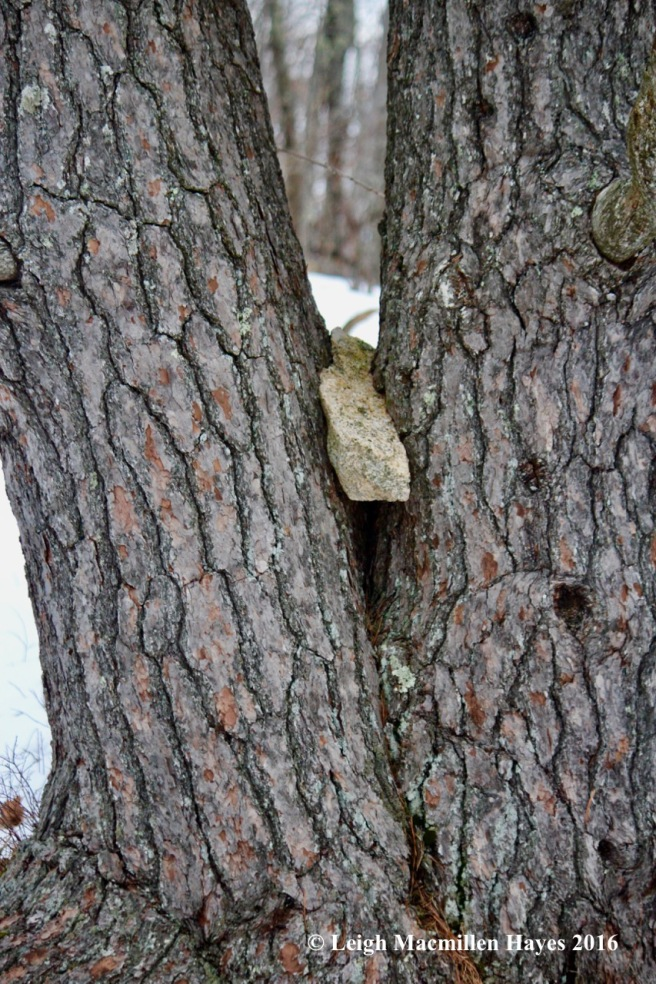 p-rock-in-tree