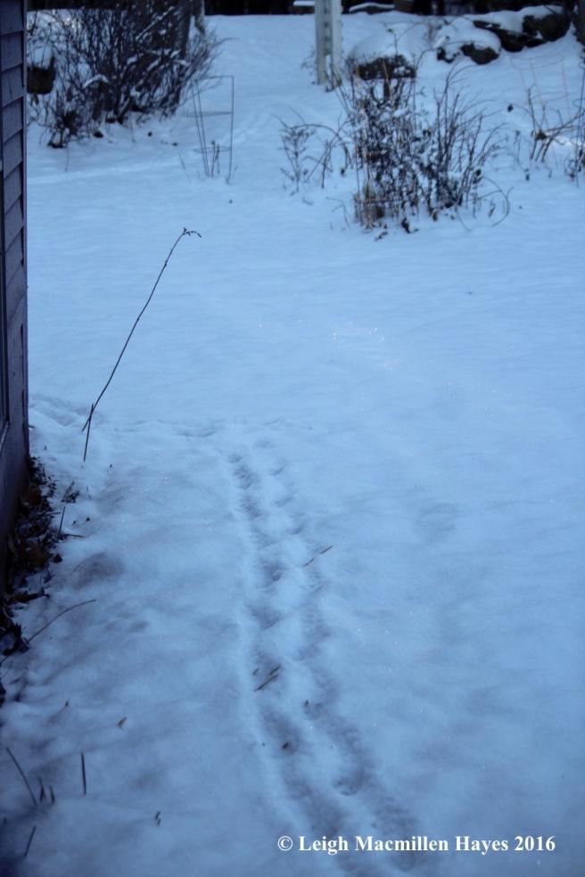 p-tracks-by-barn