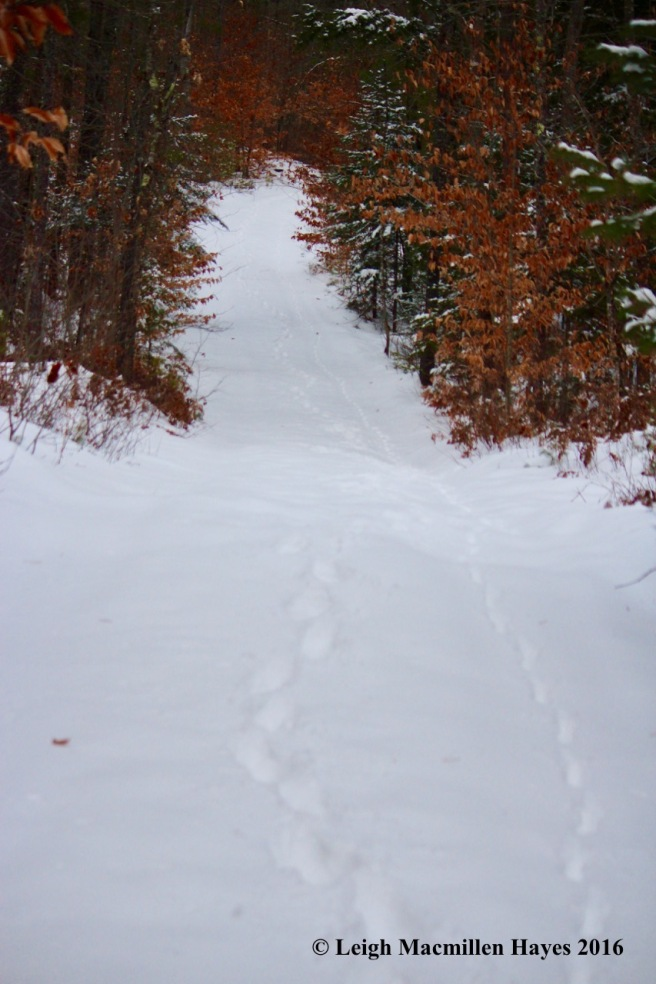 p-trail-back