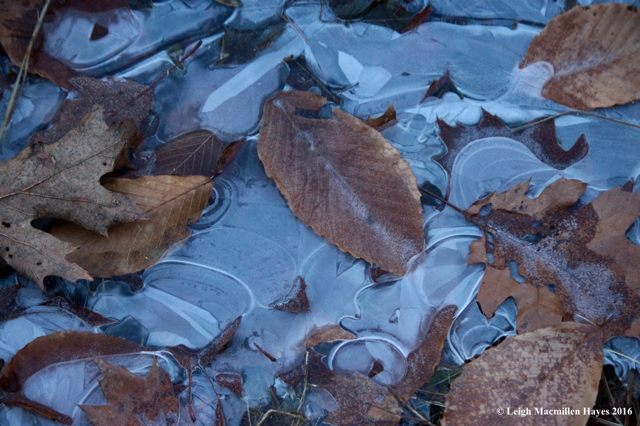 s-frozen-leaves