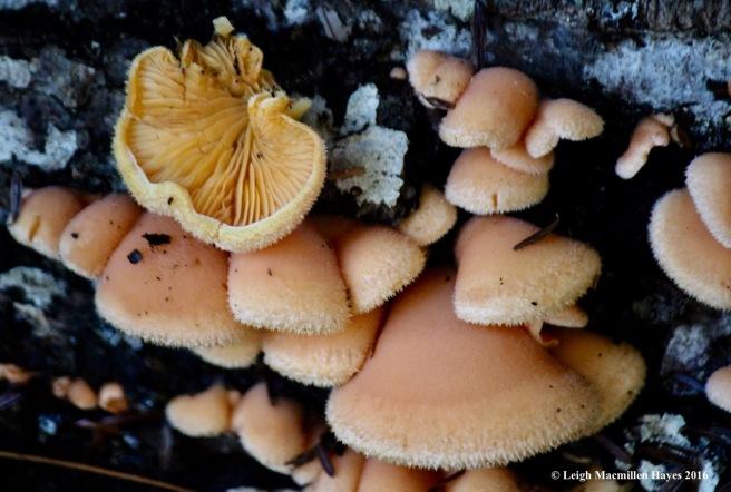 s-orange-fungi