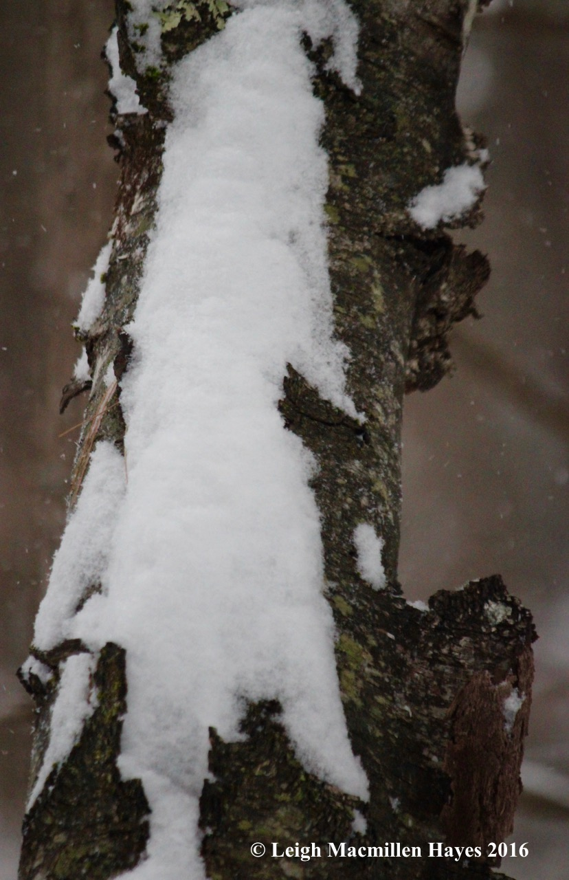 s-snow-tree