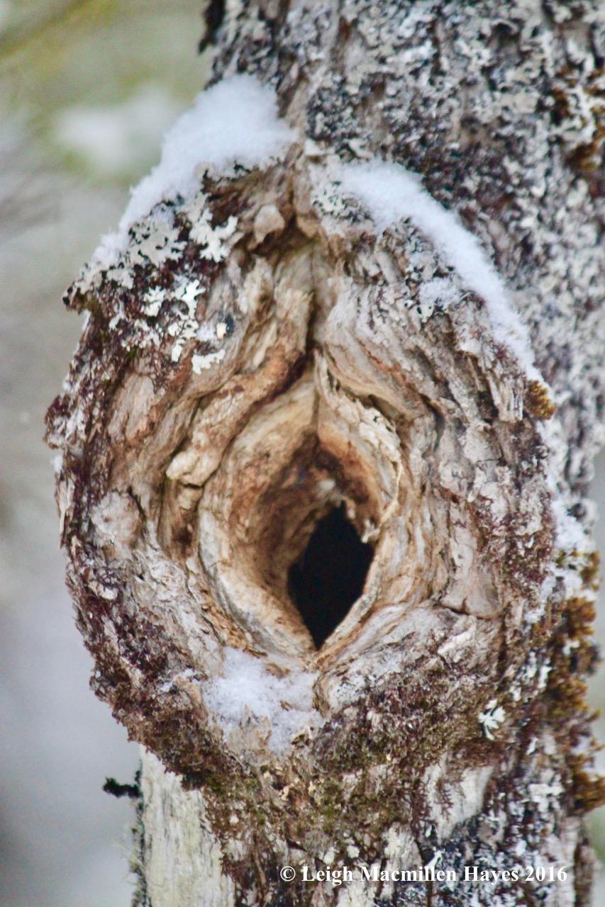 s-tree-hole