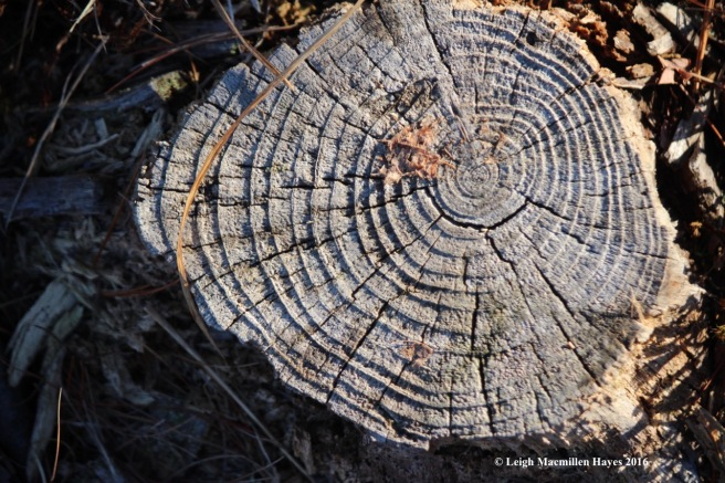 s-tree-ring-labyrinth