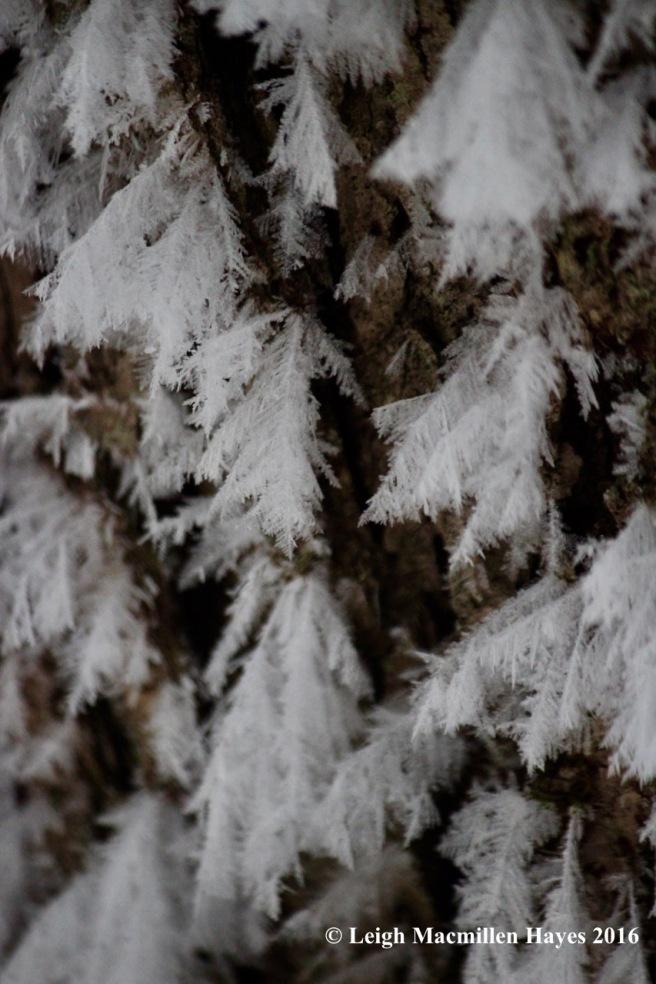 w-fern-trees