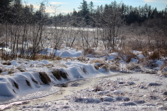 w-wilson-wing-moose-pond-bog