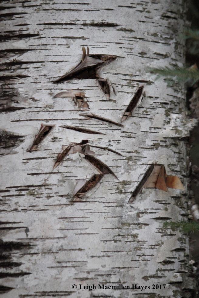b-bear-tree