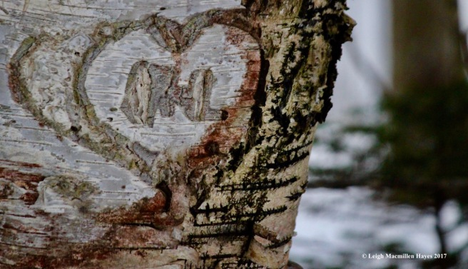 b-love-on-birch