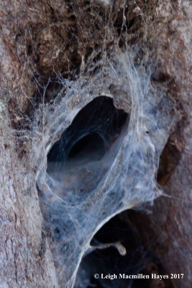 c-funnel-web