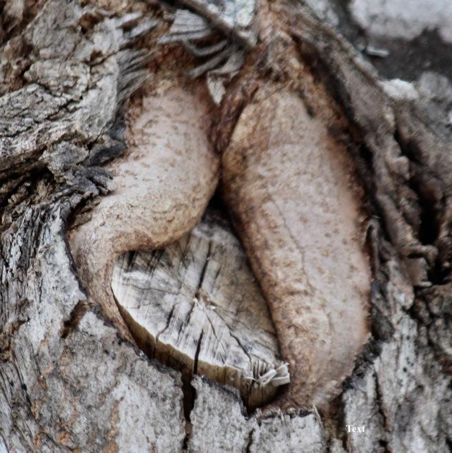 c-tree-healing-wound