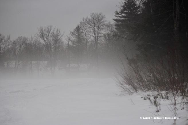 h-fog-house