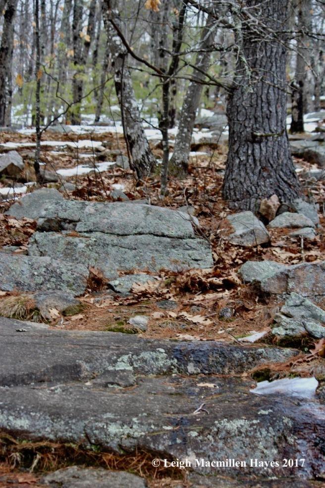 p-spring-trail-2