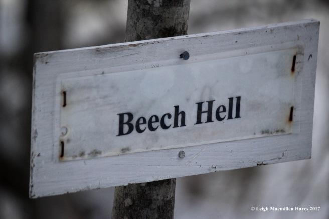 r-beech-hell