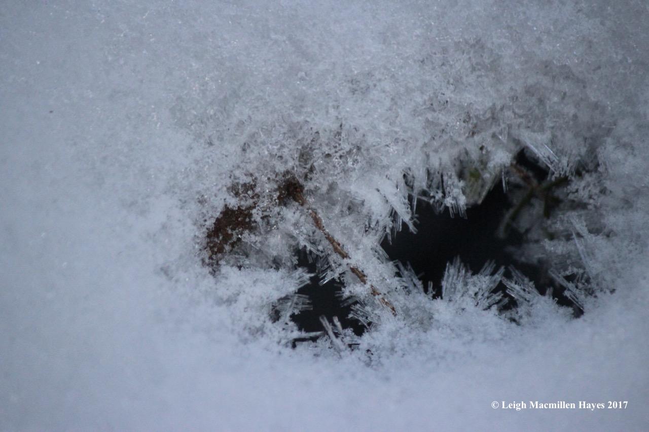r-hoar-frost1