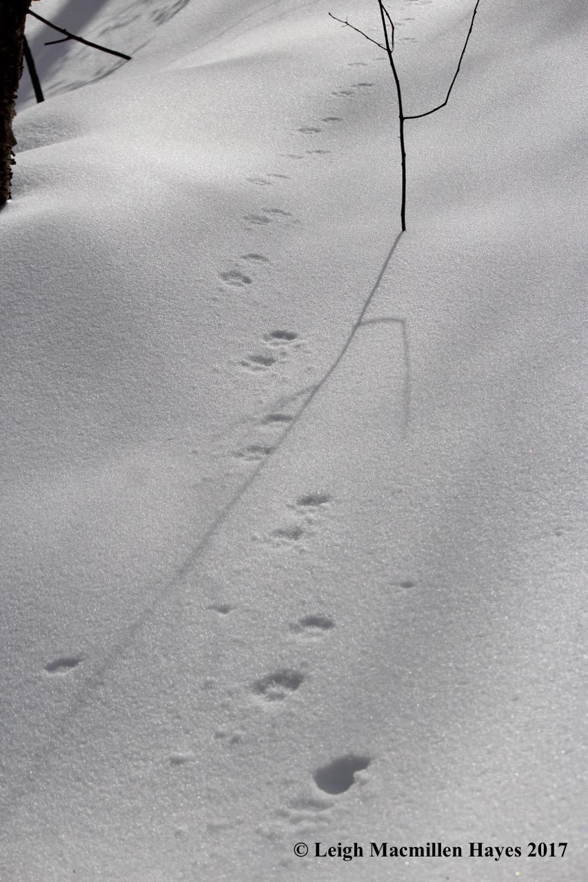 w-bobcat-trail