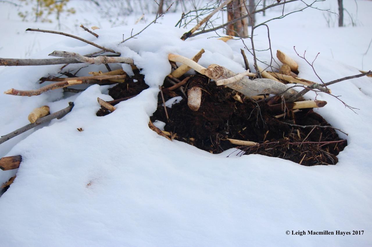 h-beaver-lodge-3
