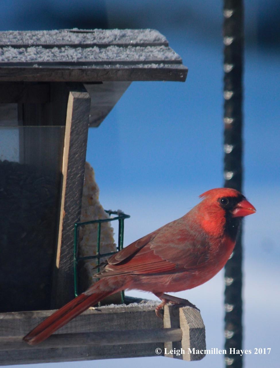 h-cardinal