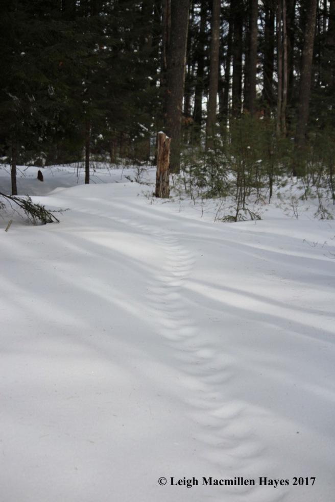 h-porky-trail