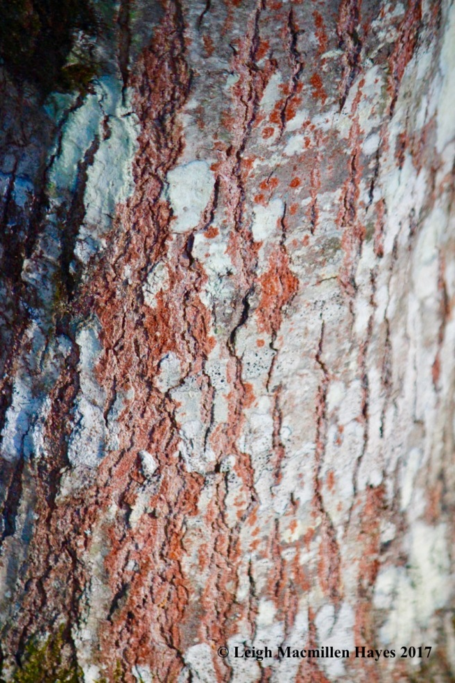 h1-red-oak-bark