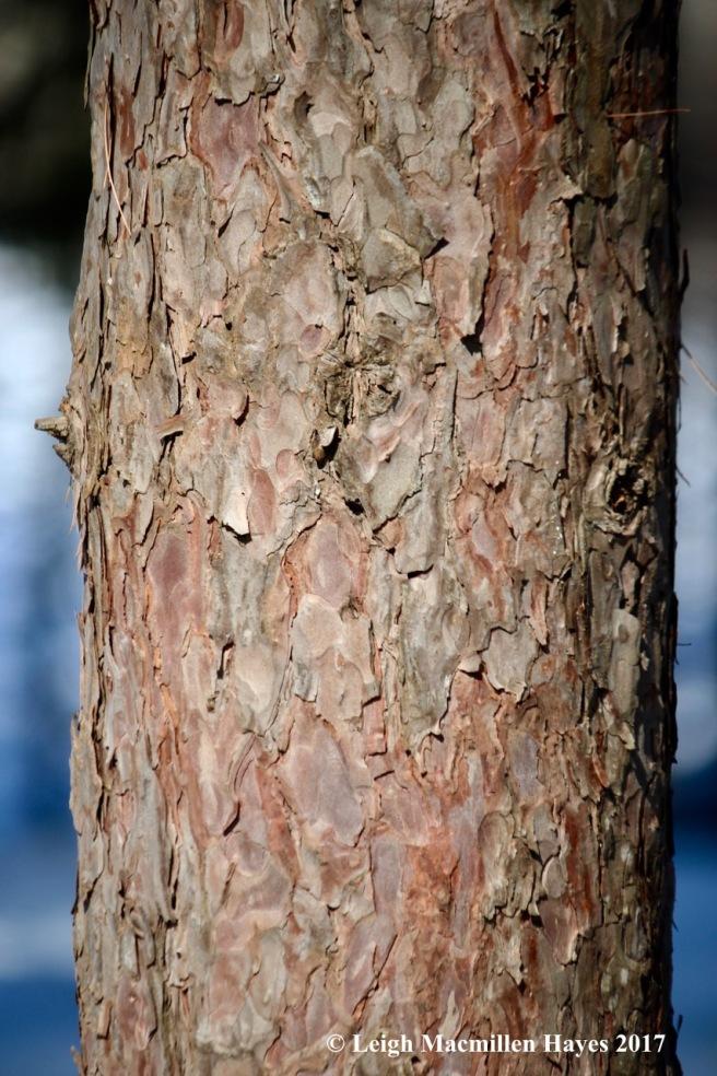 s-red-pine-bark