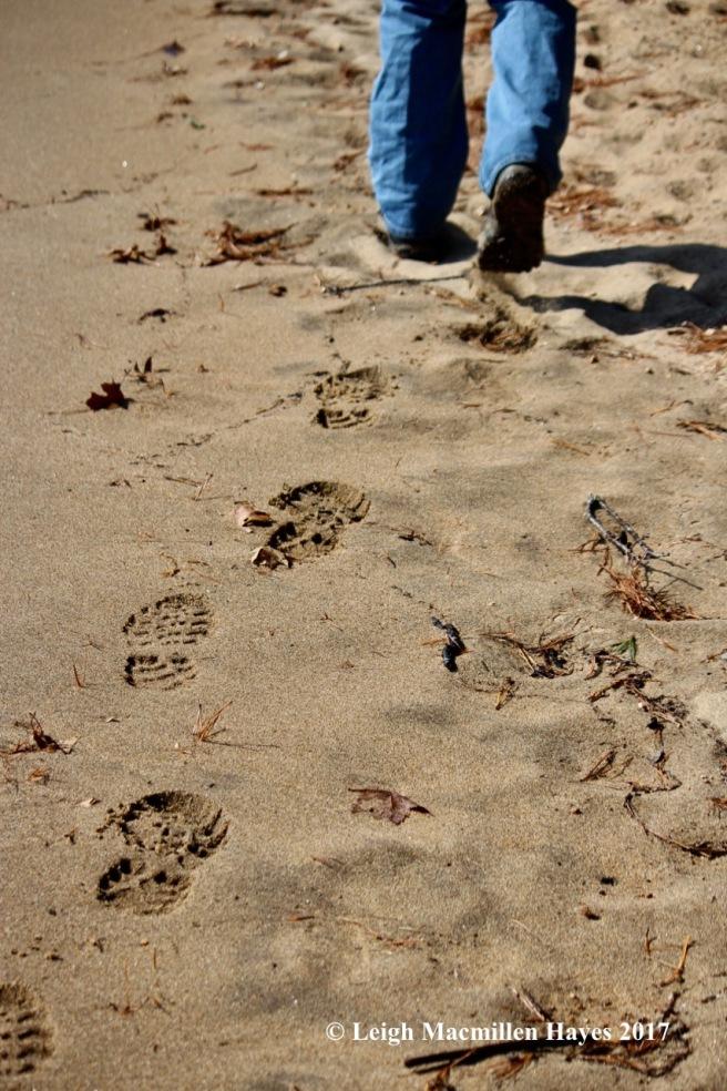 s-sand-prints