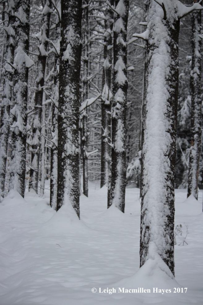 s-snow-on-trees