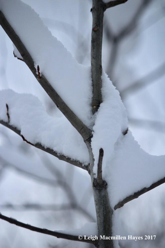 s-snow-scarf-on-tree
