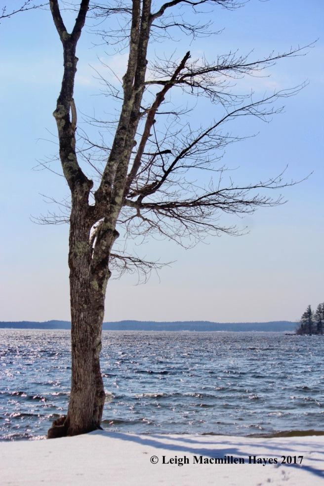 s-tree-silhouette