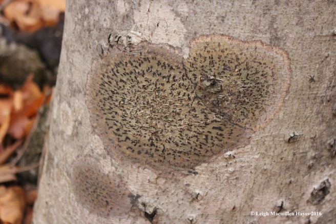 v7-lichen-1