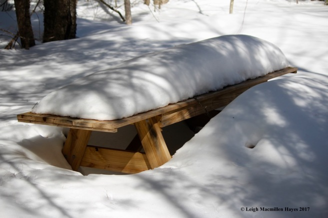 a-picnic table