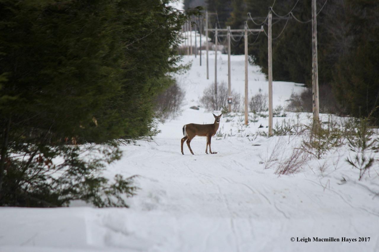 b-deer 2