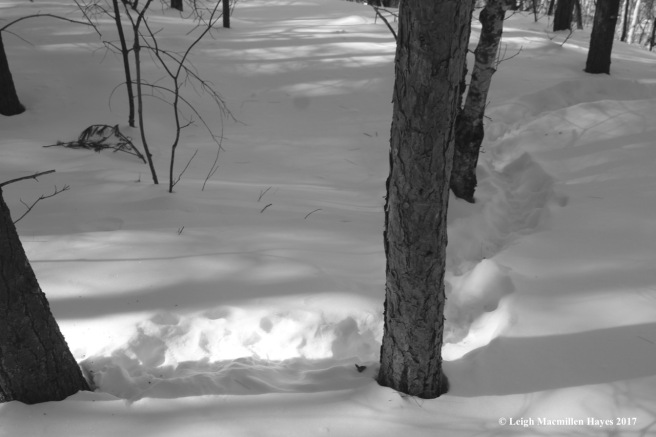 f-porcupine trail