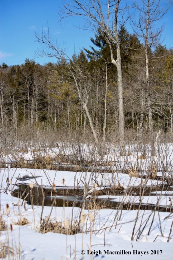 h-beaver-brook-meanders
