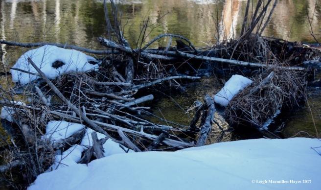 h-beaver-dam-small