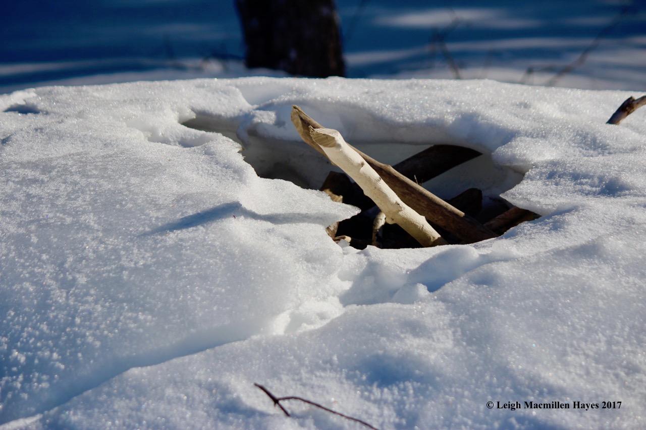 h-beaver-lodge-2-opening