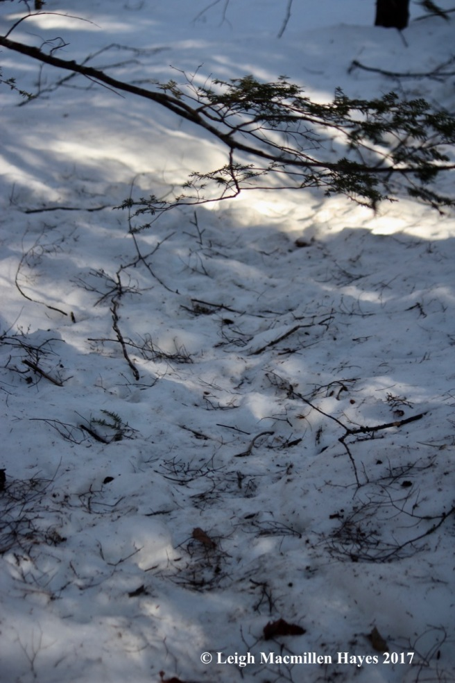 h-beaver-trail