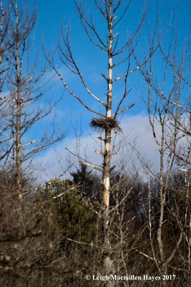 h-heron-nest-2