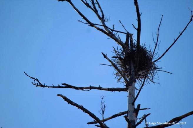 h-heron-nest-3