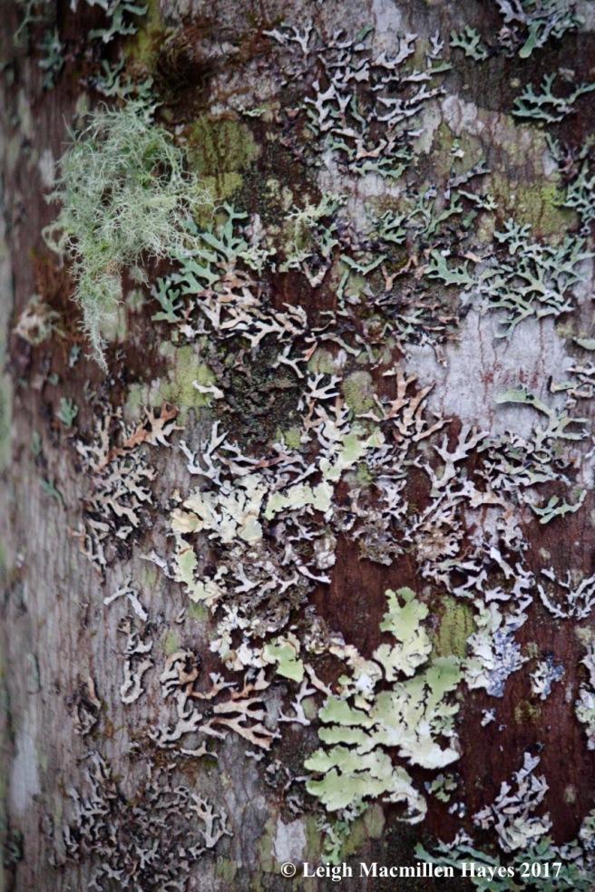 l-lichen garden