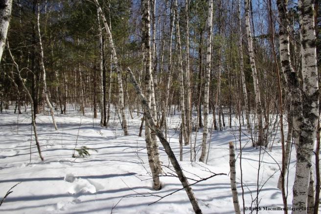 o-birch grove 1