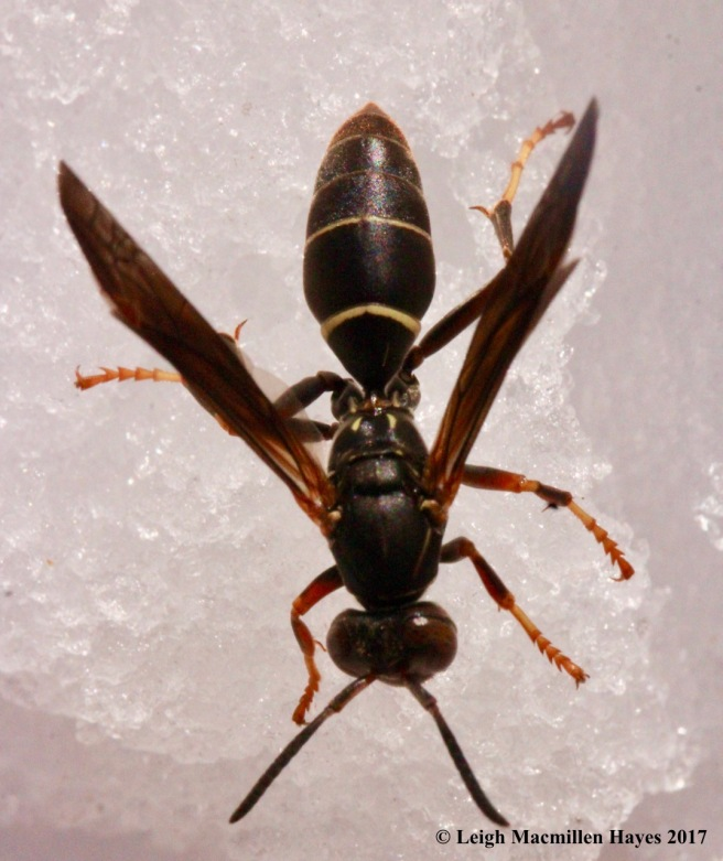 s-wasp 3