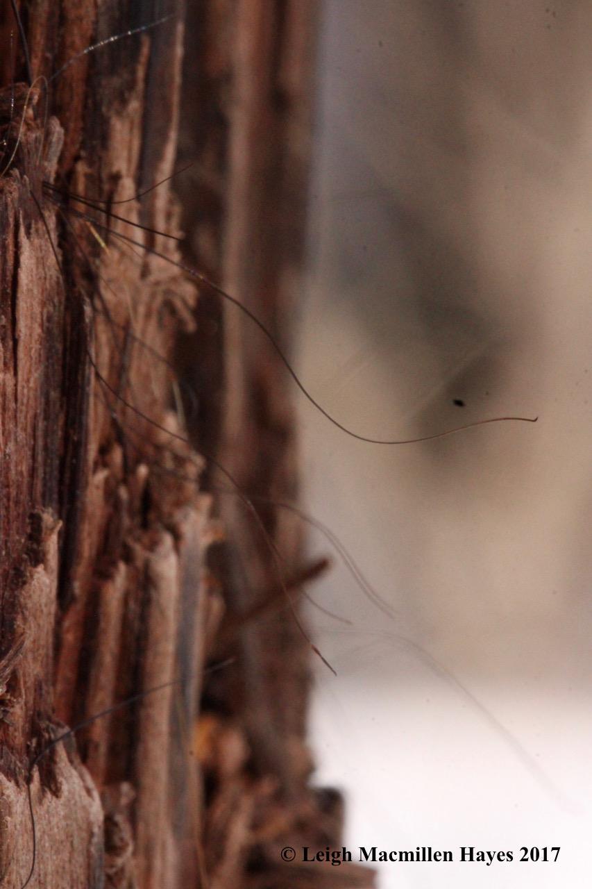 s3-bear hair