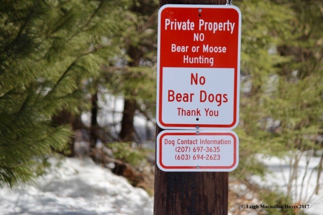 s8-bear dogs